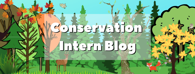 Copy of conservation intern blog